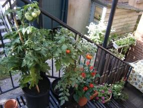 Escalier extérieur fleuri